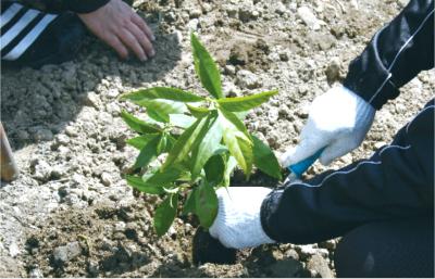 2015年には地球環境に優しい「工場の森造り活動」として地域の方々といっしょになって植樹をしました。(「夢がモリ森」と命名)